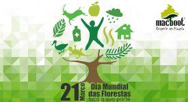 Dia Internacional da floresta : frases e música para comemorar
