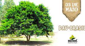 Dia do Pau-Brasil : História e curiosidades da árvore que deu origem ao nome do país