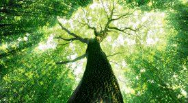 A importância das árvores para os seres humanos