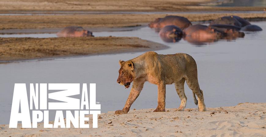 África Selvagem - Rios - Nova Série Animal Planet