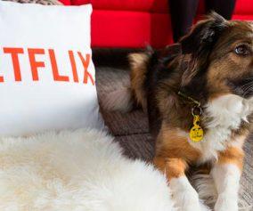 Histórias de cães: Netflix lança DOGS