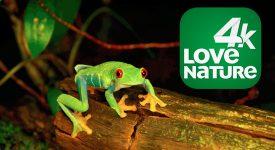 Love Nature: NET lançará canal em 4K especializado em vida selvagem e natureza
